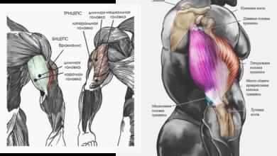 Photo of Забытая мышца: как увеличить объем трицепса всего за 30 дней |